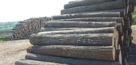дървесина за фурнир